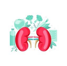 ShopDoc Lab Kidney