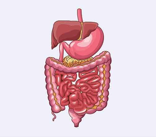 Specialist Gastroenterologist