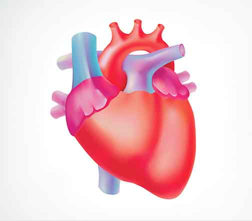 Specialist Cardiologist